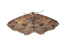 Moths Pest Control Richmond